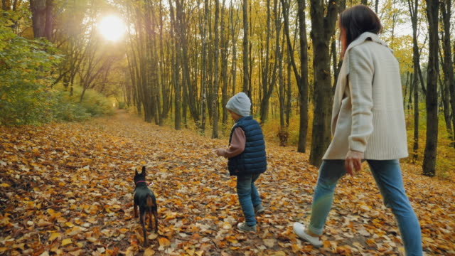 A little boy with a dog on a leash runs in the autumn park, rear view Rear view: A little boy with a dog on a leash runs in the autumn park or forest. Mom and son walk with a dwarf pinscher. Slow-motion 4k video purebred dog stock videos & royalty-free footage