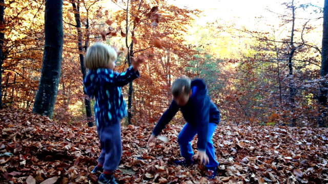 Little boys playing with leaves in forest video