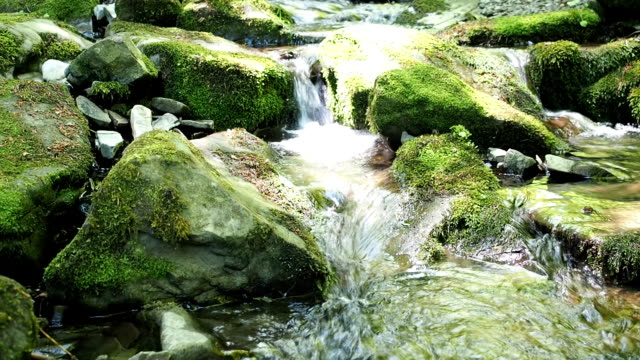 little brook in woodland in spring - masso video stock e b–roll