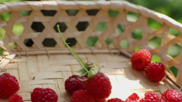 Little bug on raspberry