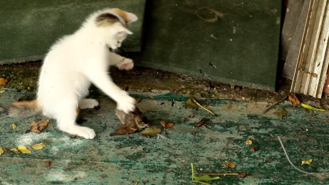 Little cat playing with bird video