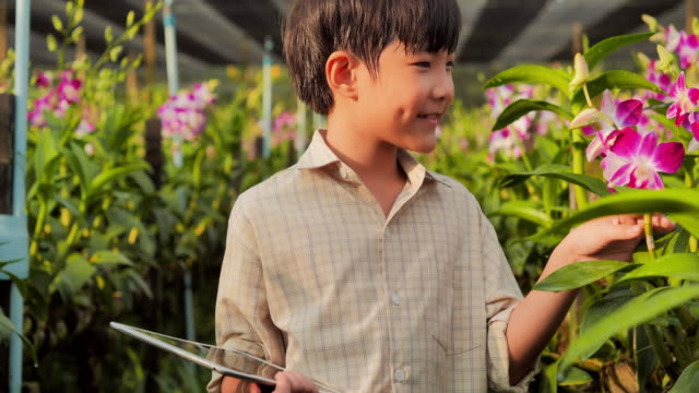 Little child boy walking in orchid flower in beautiful spring day.Baby boy outdoors in the garden.farming,gardening,agriculture,harvesting,people,technology,education,organic farming,Plant care and protection concept,Agriculture video