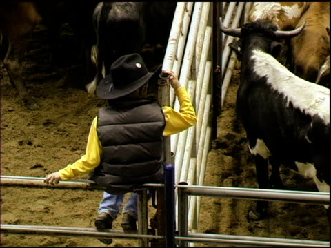 little cowboy sits on railing above corralled cattle - rodeo stock videos and b-roll footage