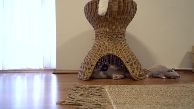 ねずみのおもちゃで遊ぶ小さな狂気猫 - 籠点の映像素材/bロール