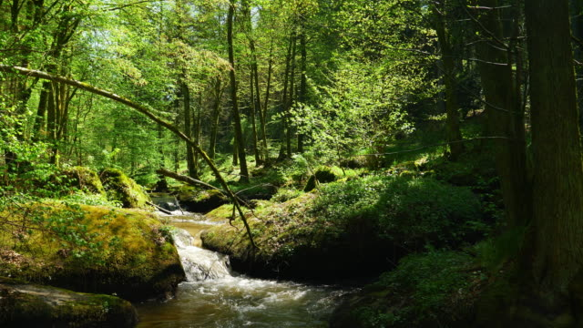 Little Creek Flowing In Rocky Spring Forest – film