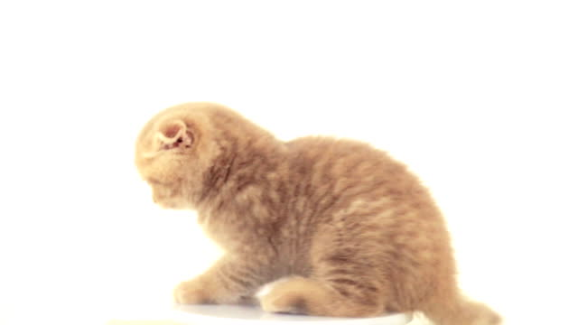 carino gatto - gattino video stock e b–roll