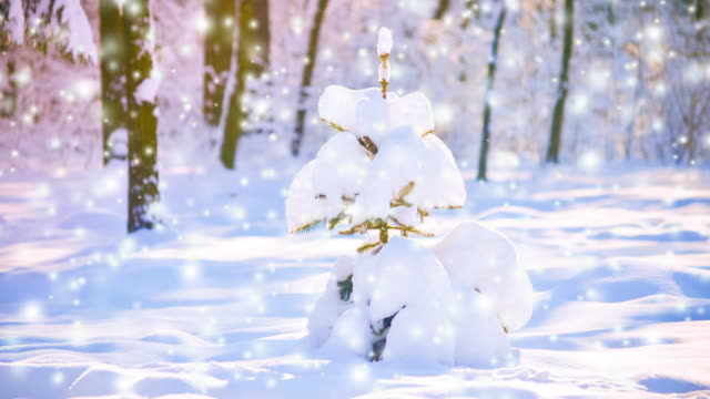 Little cute Christmas tree snow-covered in a forest on a sunny clear day video