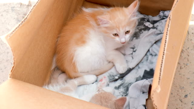 Little Cute Kittens In The Box On Sale. Timid Animals Little Cute Kittens In The Box On Sale. Timid Animals homeless shelter stock videos & royalty-free footage
