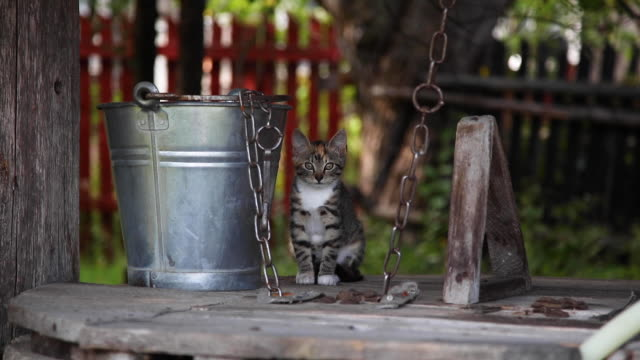 little cute kitty sits on the well