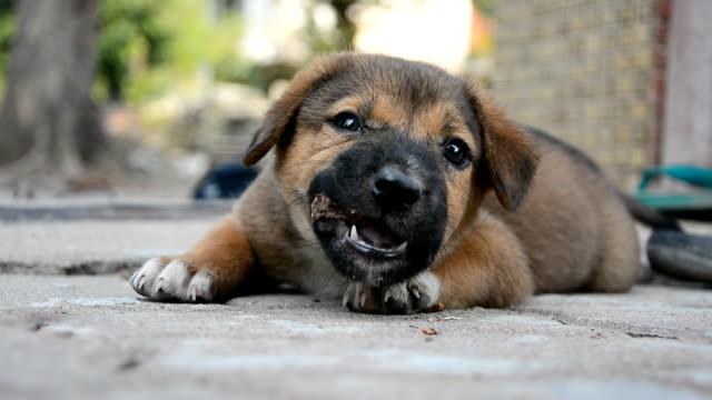 Little dog video
