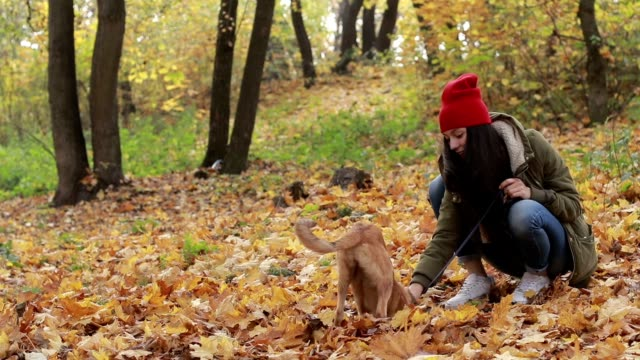 Little dog with owner playing in autumn park video