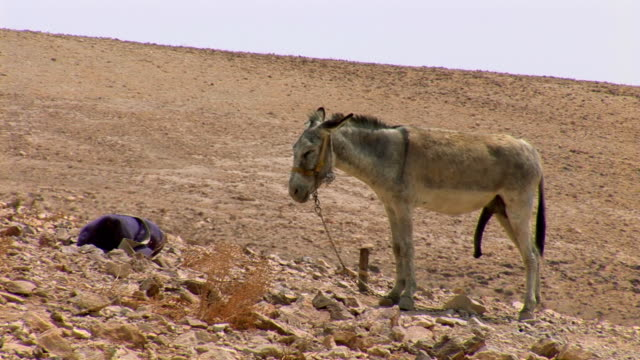 Little Donkey Stock Video - Download Video Clip Now - iStock