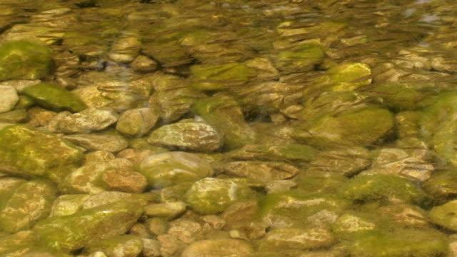 kleine fische - ichthyologie stock-videos und b-roll-filmmaterial