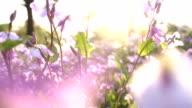 istock Little flowers at sunset 946956976