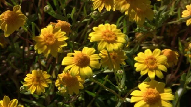 Little Flowers V.6 (HD) Little flowers in a field. (1080i source) 笹 stock videos & royalty-free footage