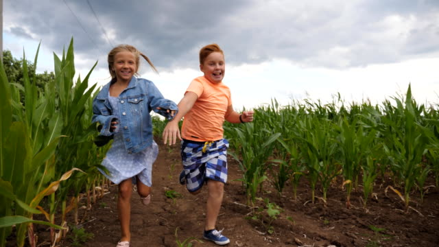 Little girl and boy having fun while running to the camera through maize plantation. Small kids playing among corn field. Cute smiling children jogging in the meadow. Concept of happy childhood.