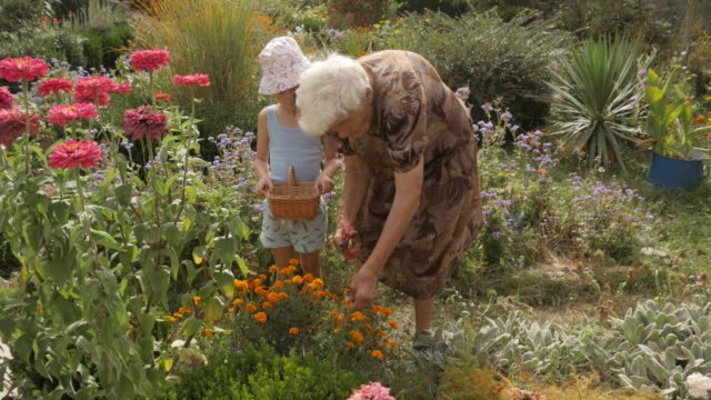 Little Girl And Her Grandmother Picking Flowers In The Garden. Real People, Rural Scene. video