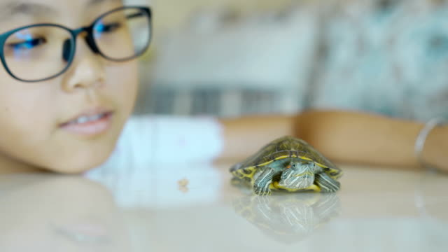Little girl and her pet turtle Little girl and her pet turtle tortoise shell stock videos & royalty-free footage