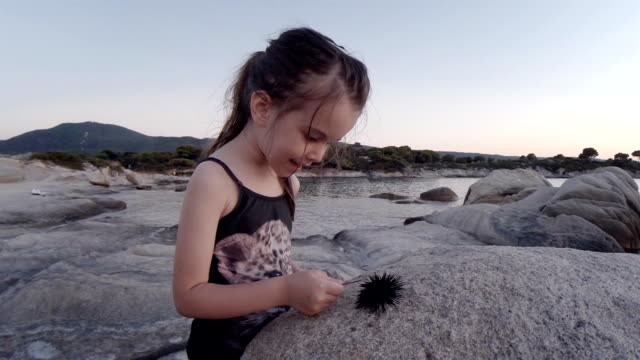 little girl and sea urchin at the beach. learning process. - curiosità video stock e b–roll