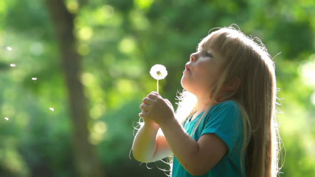 Little girl blows a dandelion Beautiful little girl blows the seeds off of a dandelion plant while standing in a park. dandelion stock videos & royalty-free footage