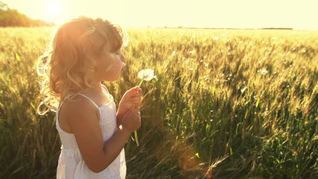 Little girl blows plant seeds Beautiful little girl blows the seeds off of a dandelion plant while standing in a field of wheat. dandelion stock videos & royalty-free footage