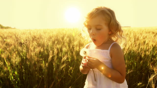 Little girl blows plant seeds video
