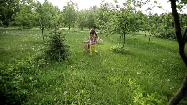 Little girl catch pedigree dog Beagle playing outdoor. video