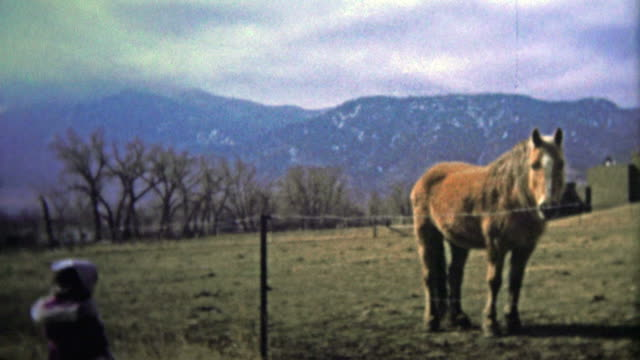 BOULDER, CO. USA - 1974: Little girl checking out a horse on the ranch on a chilly day with foothills in the background. video