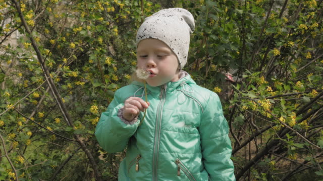 Little girl child blowing on a dandelion