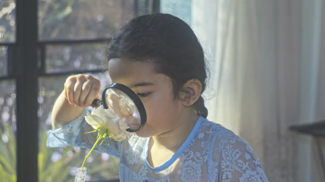 liten flicka barn utforska med ett förstoringsglas letar efter insekter i blomma. utbildning - glas material bildbanksvideor och videomaterial från bakom kulisserna