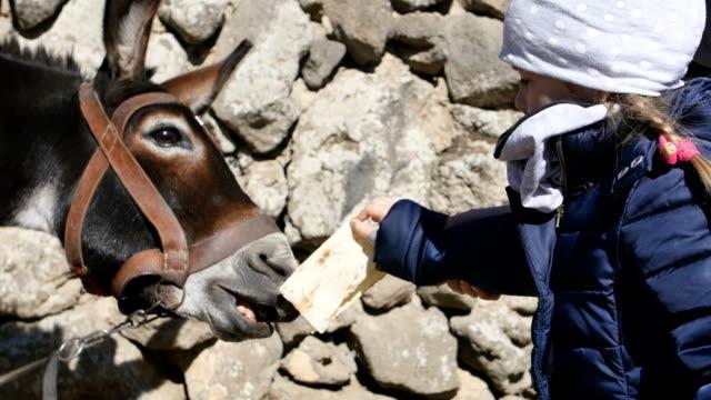 Little girl feeding a donkey. video