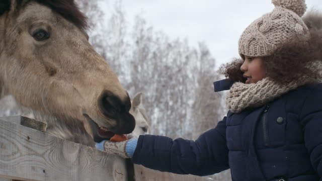 bambina che nutre i cavalli - bestiame video stock e b–roll