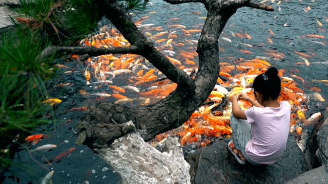A little girl feeds koi in a pond