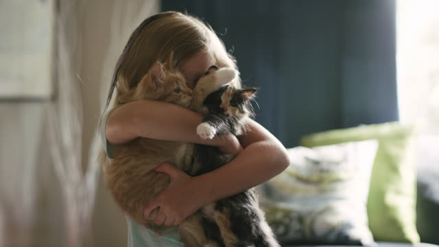 A little girl hugging two kittens in her arms and kissing them on the head video
