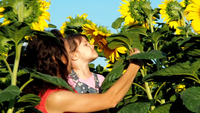 a little girl in her mother's arms is sniffing a sunflower - молдавия стоковые видео и кадры b-roll