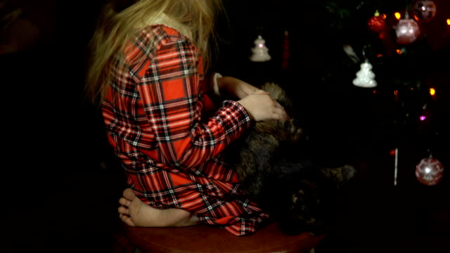 A little girl is stroking a cat sitting on a chair in front of a Christmas tree. video