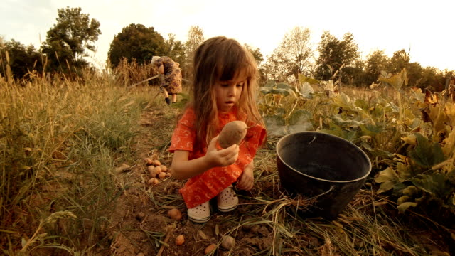 A Little Girl Learns From her Grandmother How to Pick Potatoes. Real People, Rural Scene,. Lens Flare, Unusual Angle, GoPro. video
