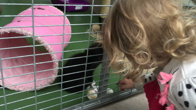 Little girl looking to re-home a kitten from a pet rescue center Pet rescue centre with a little girl wanting to adopt a kitten homeless shelter stock videos & royalty-free footage
