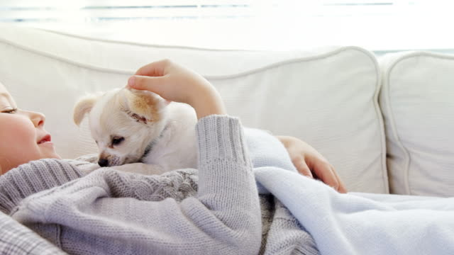 Little girl lying on sofa stroking her pet at home 4K 4k Close-up of little girl lying on sofa stroking her pet at home 4K 4k innocence stock videos & royalty-free footage