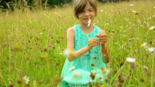 little girl on field in summer day - нивяник стоковые видео и кадры b-roll