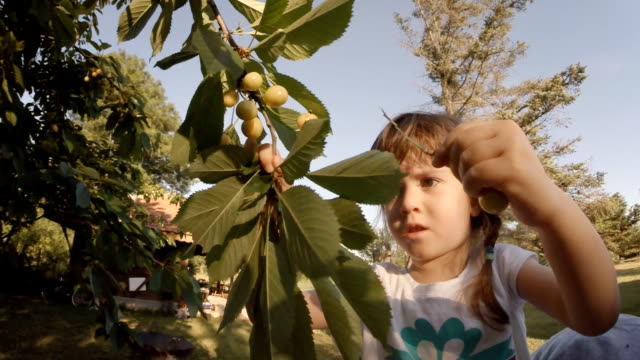 A Little Girl  Picked a Cherries. POV, Lens Flair, Dreamy Look, Slow Motion. video