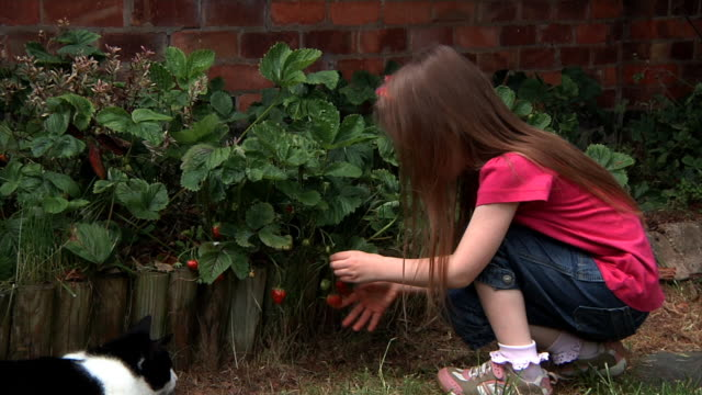 Little girl picks and eats strawberry video