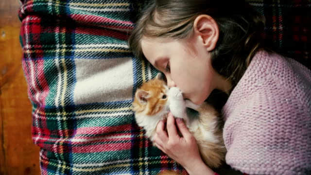 little girl playing with kitten on the bed - kot filmów i materiałów b-roll