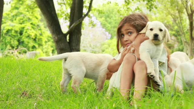 Little Girl Playing With Puppies Innocent little girl playing with puppies in the garden. Pls checkout out video lightboxes  puppy stock videos & royalty-free footage