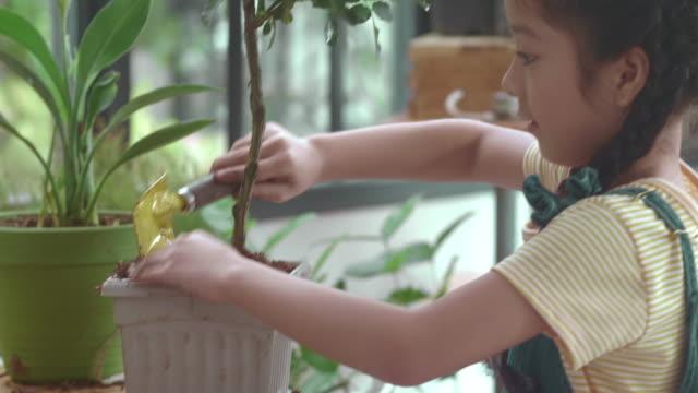 kleines mädchen blumen topfen - urban gardening stock-videos und b-roll-filmmaterial