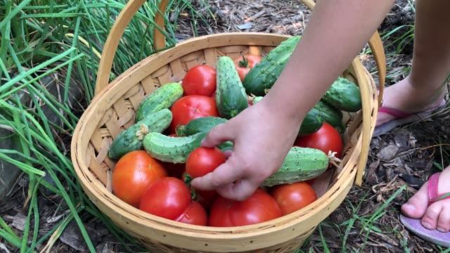 小さな女の子は、彼女が庭から選んだ有機野菜の完全なバスケットに小さなトマトを置きます。 - 収穫点の映像素材/bロール