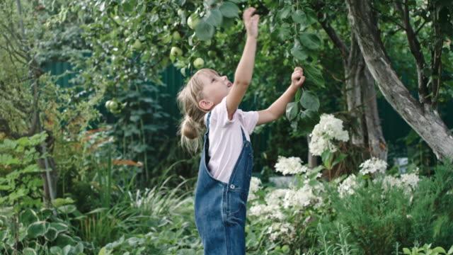 liten flicka att nå för äpplen i trädgården - på tå bildbanksvideor och videomaterial från bakom kulisserna