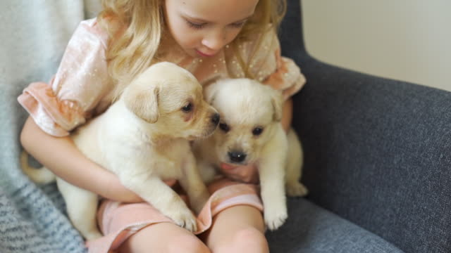 little girl resting with puppies in an armchair - fedeltà video stock e b–roll