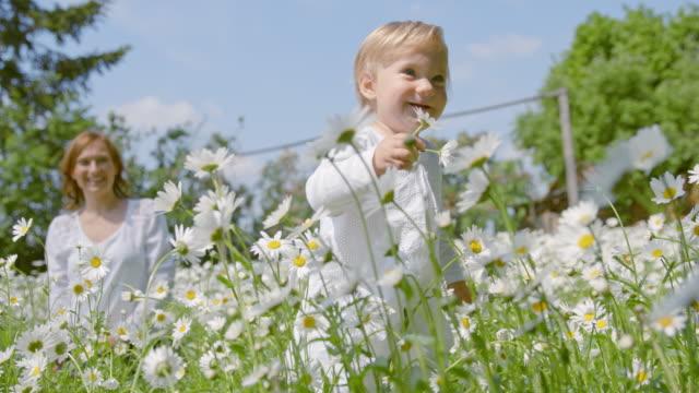 slo mo little girl taking first steps among daisies - нивяник стоковые видео и кадры b-roll