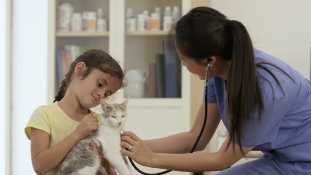 Little Girl Taking Her Cat to the Vet video